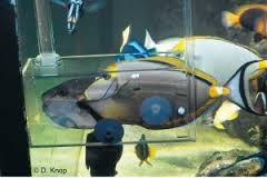 La cattura dei pesci in acquario trappole per pesci for Contenitore per pesci