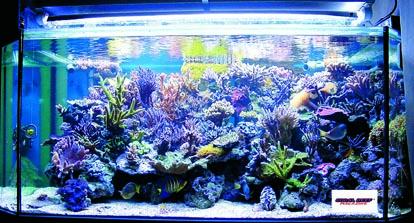 Un secchio di sale marino e relative conseguenze rivista for Pesci per acquario piccolo