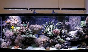 L illuminazione a led per l acquario marino rivista coralli il
