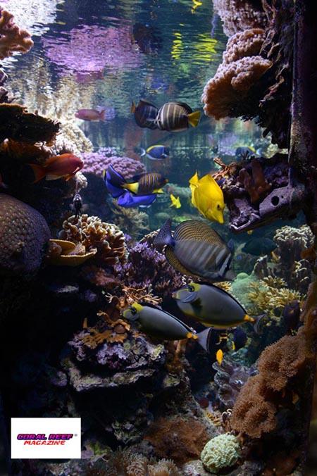 L acquario di barriera corallina del museo di scienze for Acquario a colonna