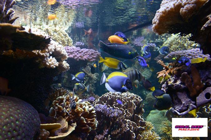 L acquario di barriera corallina del museo di scienze for Acquario per tartarughe grandi