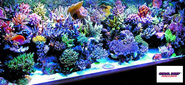 Un magnifico acquario di barriera rivista coralli il for Acquario marino