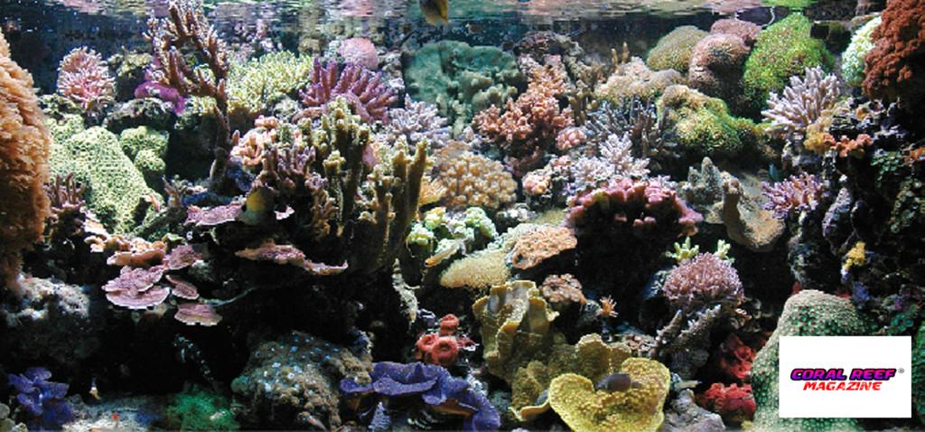 Vista frontale dell'acquario