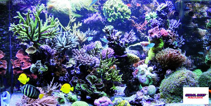 Vista frontale dell'acquario.