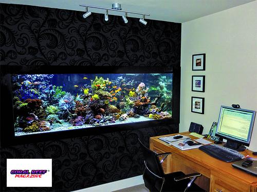 Un acquario di lusso per l ufficio rivista coralli il for Acquario da parete