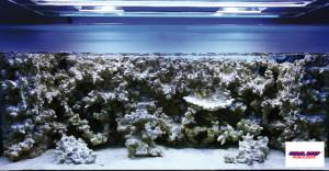 """Ancora un deserto di ceramica, ma già un anno dopo un reef fiorente. La decorazione """"in un'unica fusione"""" è sicuramente una parte significativa del successo."""