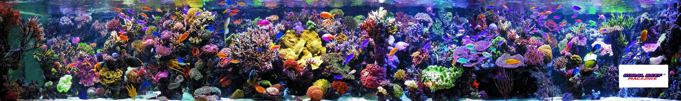 In un acquario di barriera in salute non si verifica un arricchimento di nitriti.