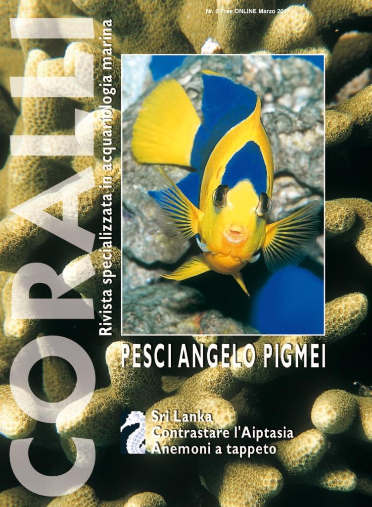 Coralli nr 6 free online pesci angelo pigmei rivista for Pesci online