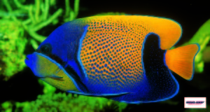 E' sempre opportuno verificare l'assenza dei nitriti per evitare qualsiasi rischio di intossicazione dei pesci presenti nell'acquario.