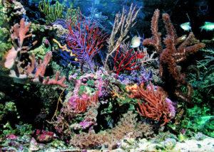 Un magnifico acquario marino rivista coralli il for Acquario marino 300 litri prezzo